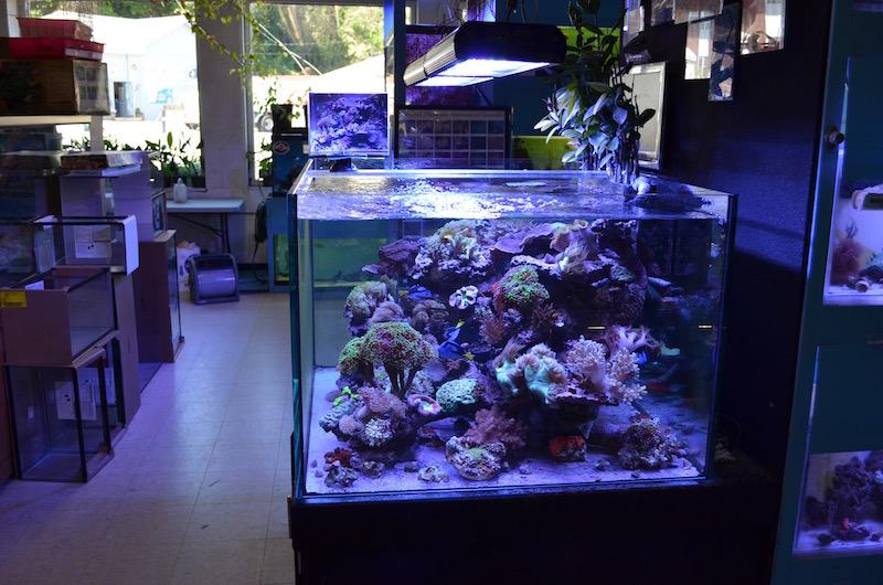 Aquaticsworld