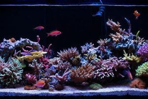 How to Decorate Your Aqua One Fish Tanks